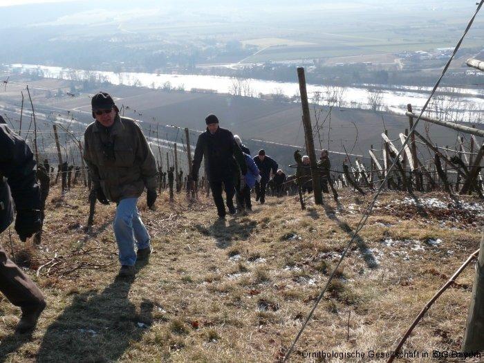 Zippammer-Lebensraum bei Retzbach in kleinstrukturierten Weinbau-Hängen