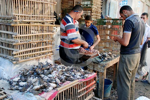 Verkaufsstand mit erbeuteten Vögeln, Ägypten Foto: Jens-Uwe Heins