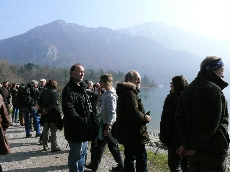4. Bayerische Ornithologentage 2014 Exkursion zum Kochelsee