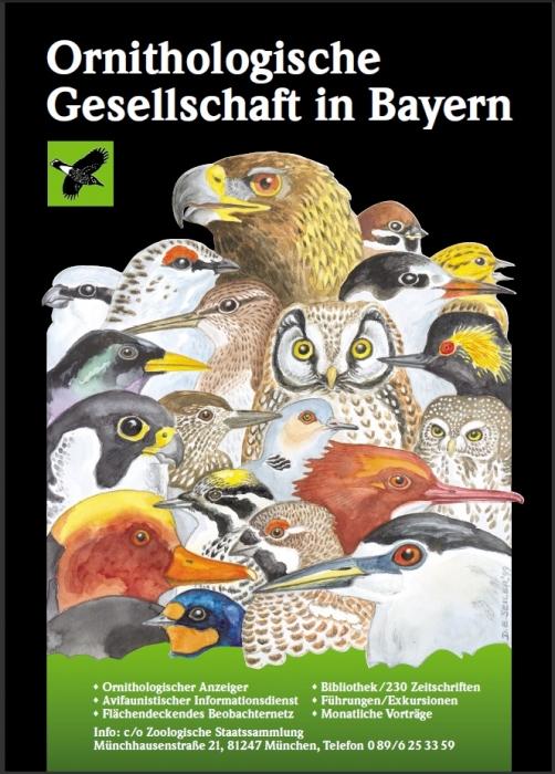 OG-Poster Vogelköpfe