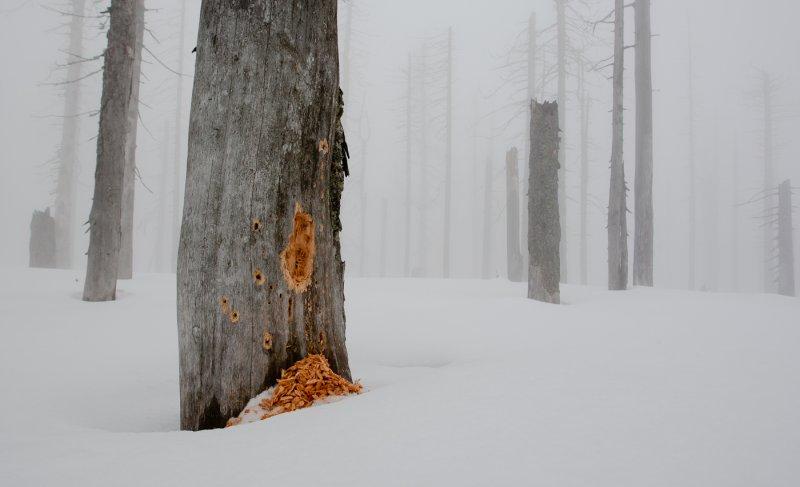 Nationalpark Bayerischer Wald   Foto: S. Rösner